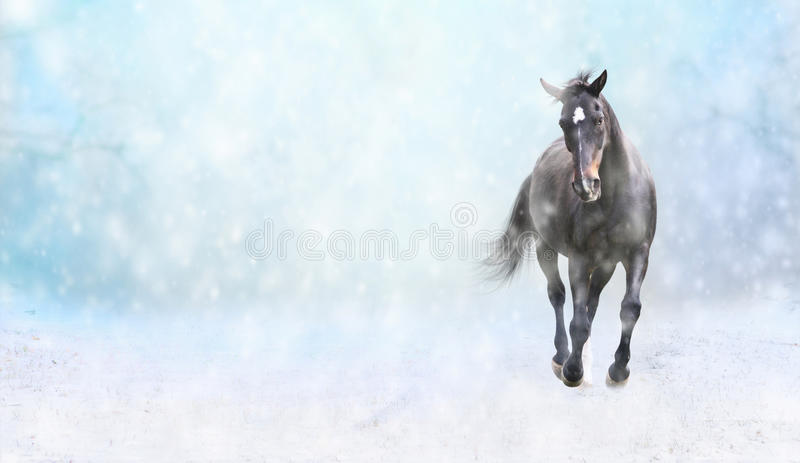 Running black horse in snow, winter banner stock images