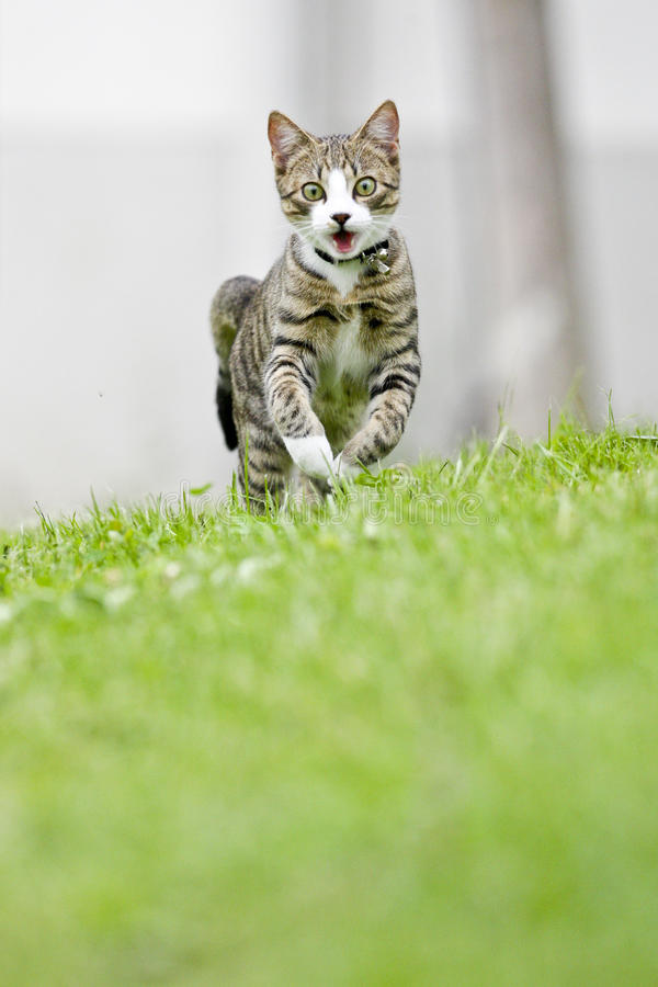 Free Running Cat Stock Photography - 12919592
