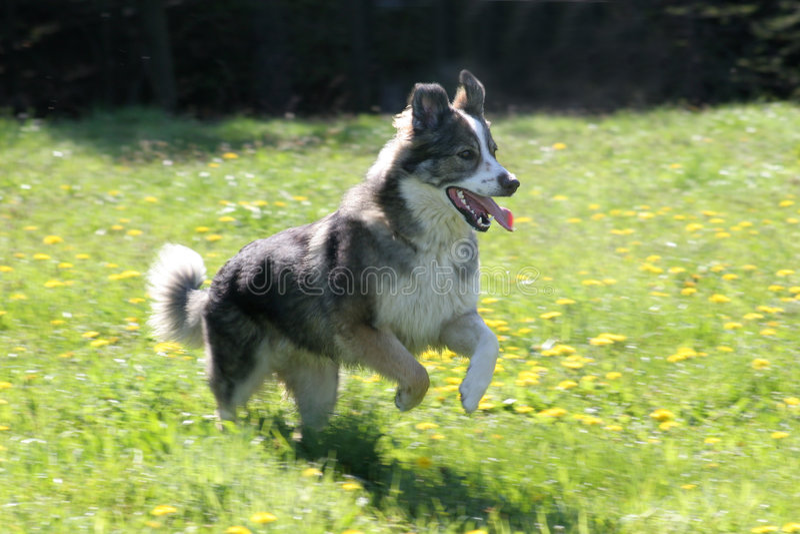 Running Dog stock photo