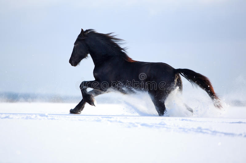 Download Horse stock image. Image of freezing, wildlife, snout - 30041029