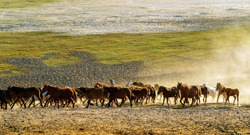 Running a group of horses royalty free stock images
