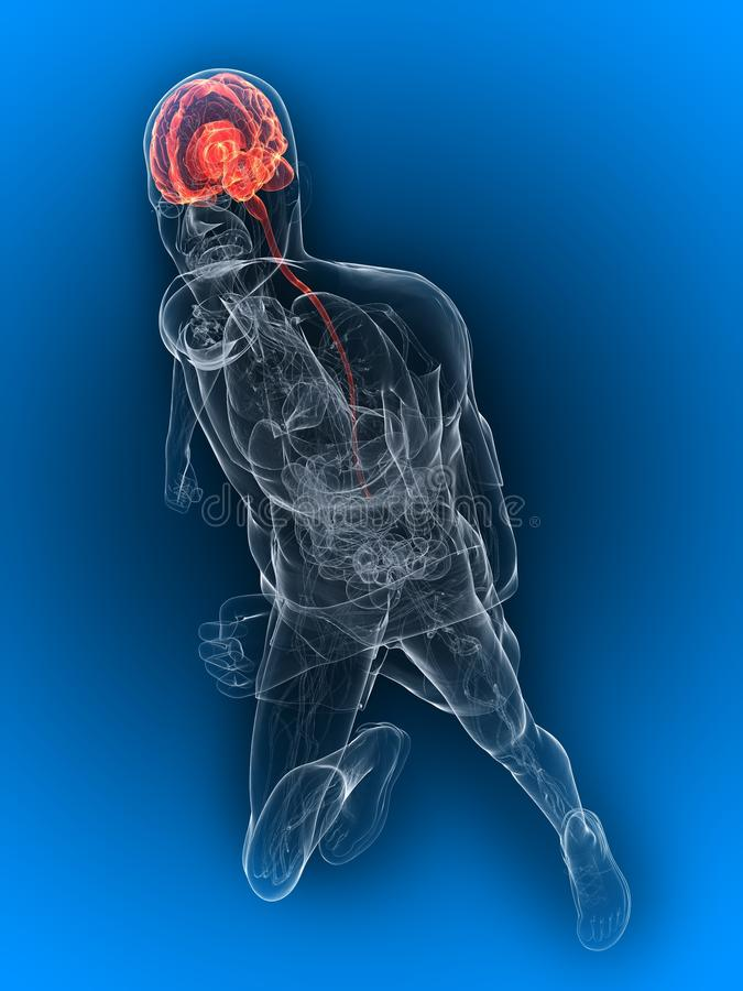 Running - Highlighted Brain Stock Photography
