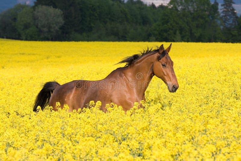 Running Horse I...