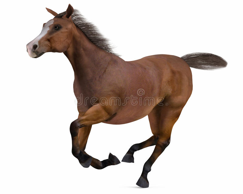 Running Horse isolated royalty free stock image