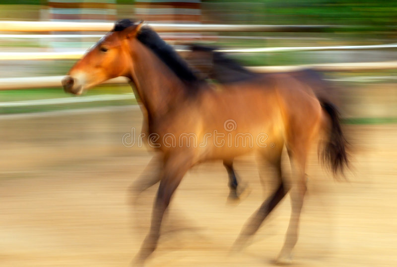 Download Running horses stock photo. Image of movement, ranch, stallion - 5811954