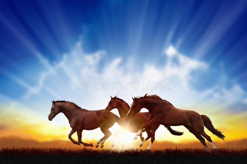 Running horses. Peaceful background - running horses, beautiful sunset, picture for chinese year of horse 2014