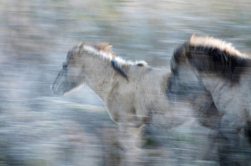 Running horses in the snow stock photography