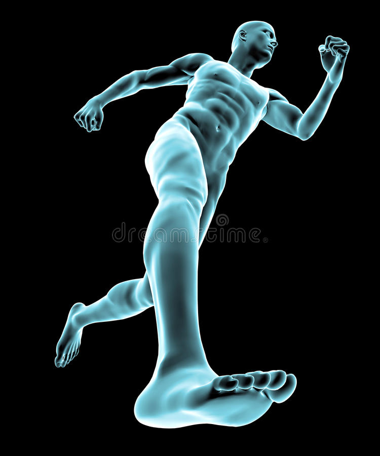 Running human body. With muscle vector illustration