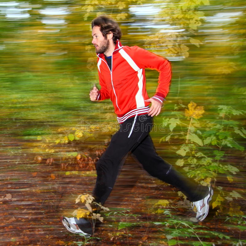 Free Running In The Forest Royalty Free Stock Photography - 11517157