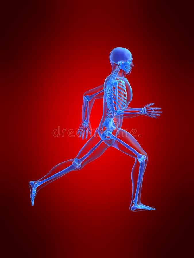 Download Running man anatomy stock illustration. Image of illustration - 2807861