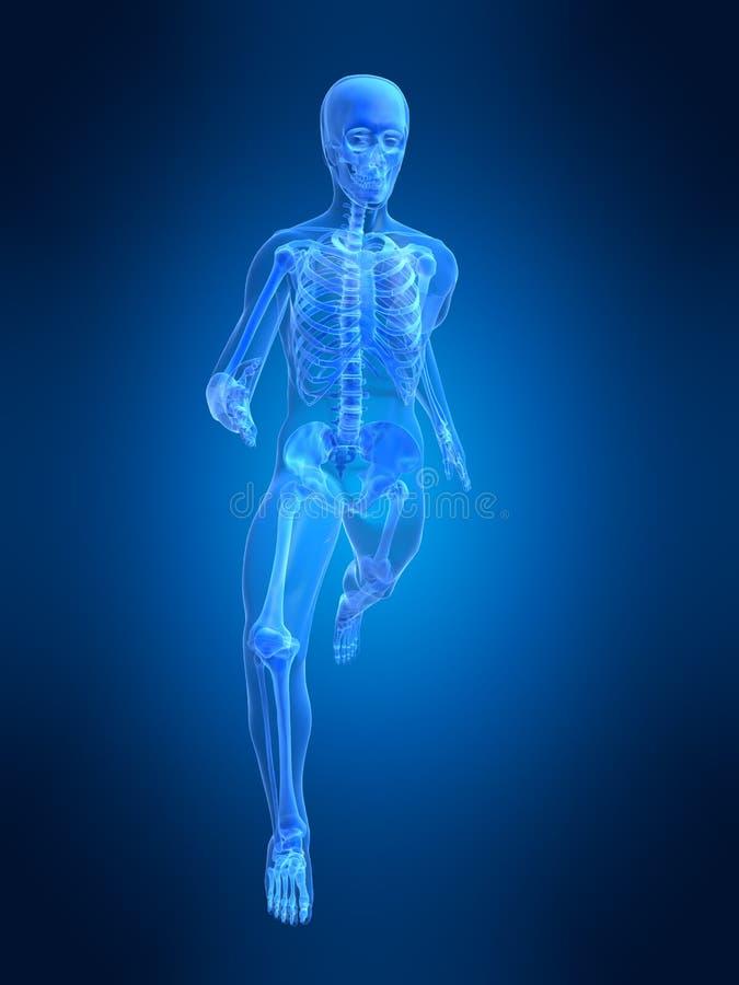 Download Running man anatomy stock illustration. Image of meniscus - 2807865