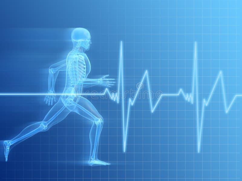 Running man anatomy stock illustration