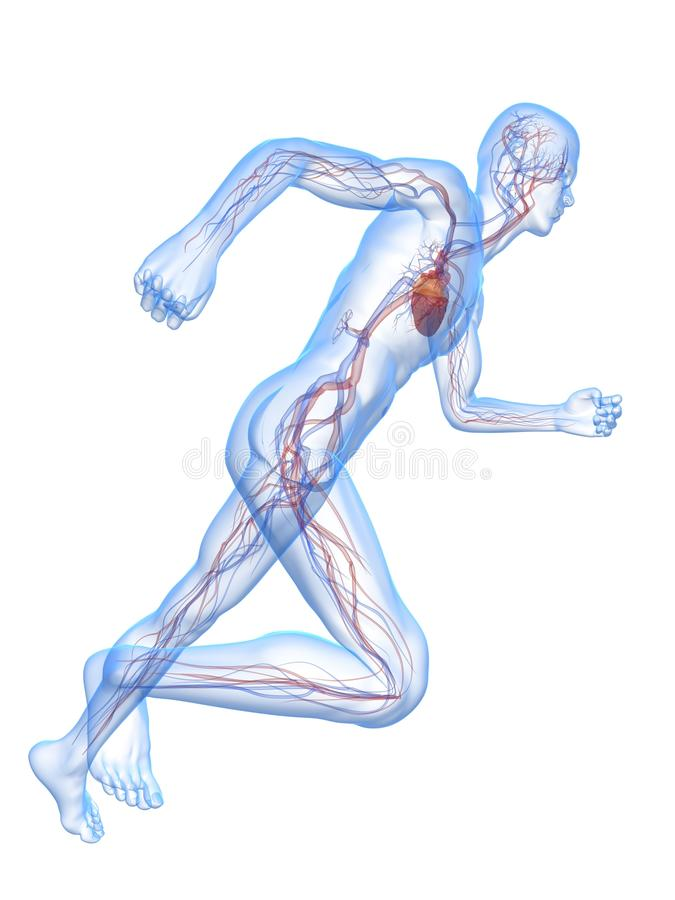 Running man - vascular system vector illustration