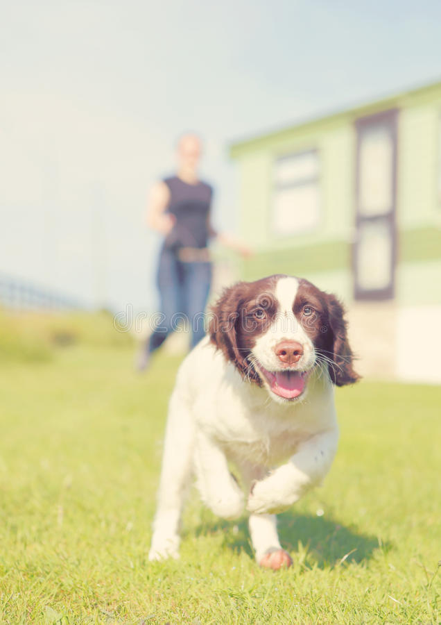 Free Running Puppy Dog Royalty Free Stock Photos - 61303868