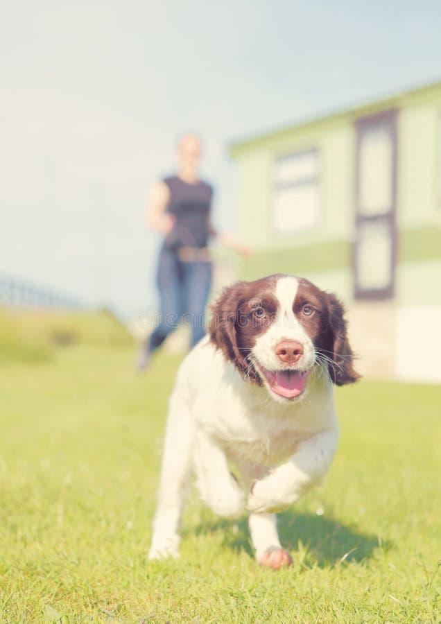 Running puppy dog. Running happy puppy dog, retro filter look. Obedience training