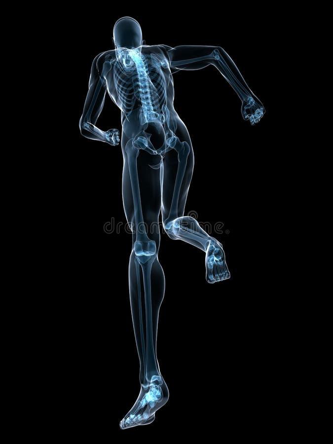 Running skeleton vector illustration