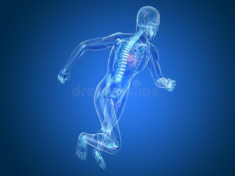 Running Skeleton Royalty Free Stock Photo