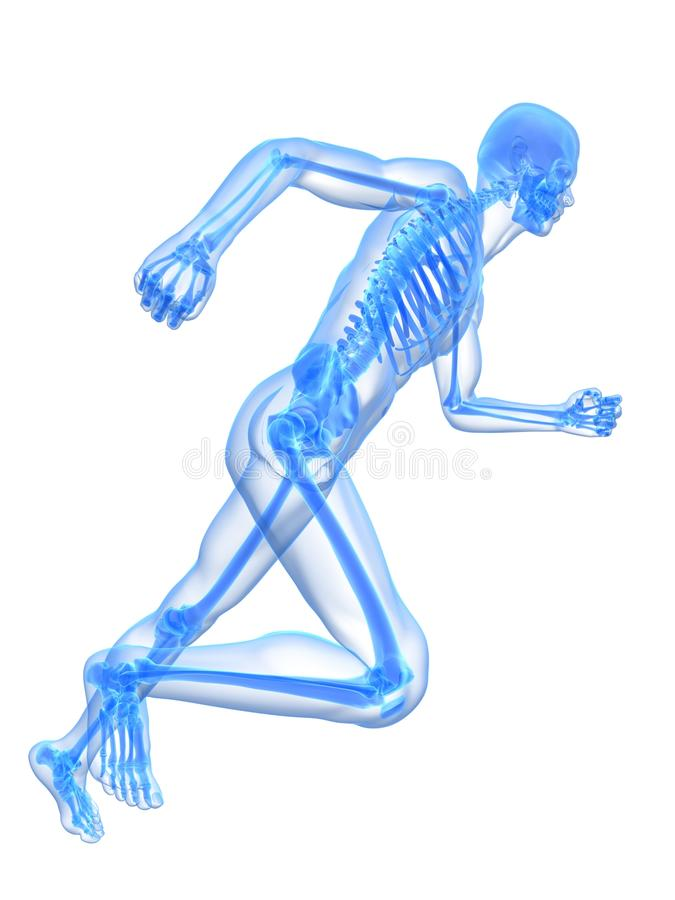 Download Running skeleton stock illustration. Image of human, healthcare - 12902263