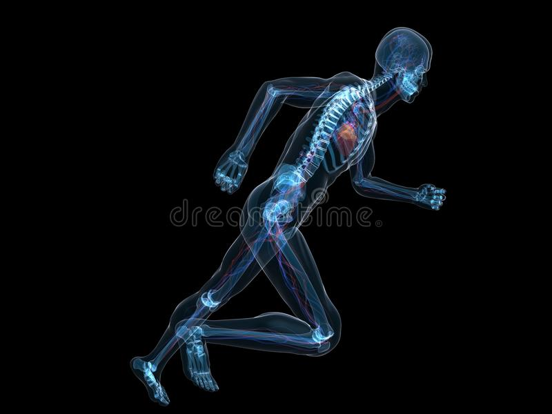 Running Skeleton Stock Image