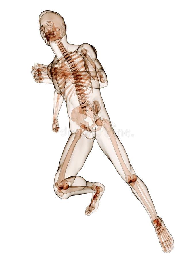 running skelett stock illustrationer
