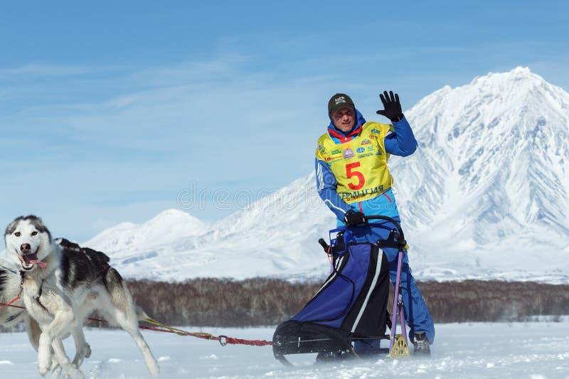 Running sled dog team musher Denis Ryabuhin. Kamchatka Sled Dog Racing Beringia stock images