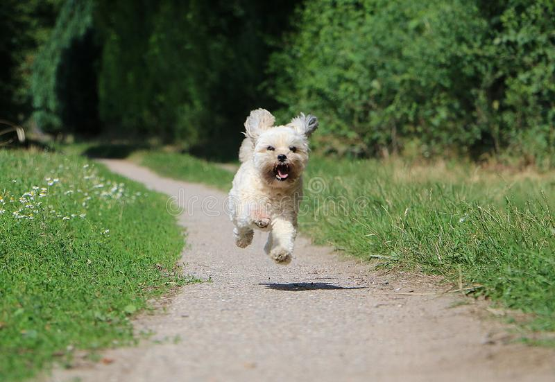 Running small dog in the garden stock images