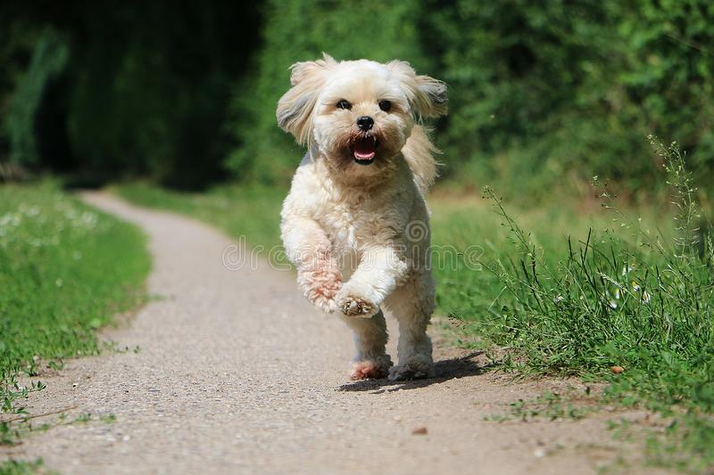 Running small dog in the garden royalty free stock photo