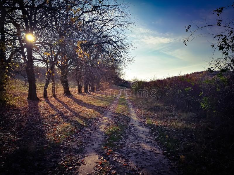Running track at sunset in the autumn. Crosscountry running track in the autumn royalty free stock photos