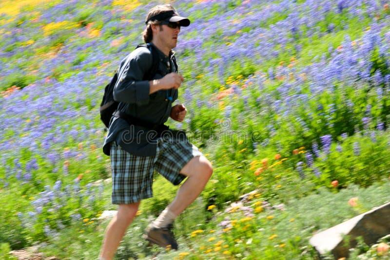running trail royaltyfri bild