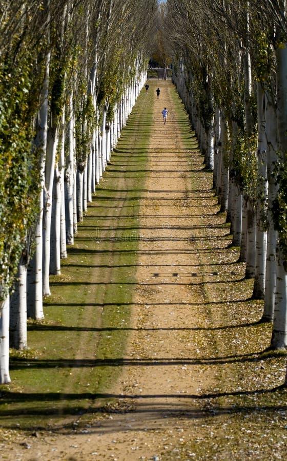 Running between trees stock photos