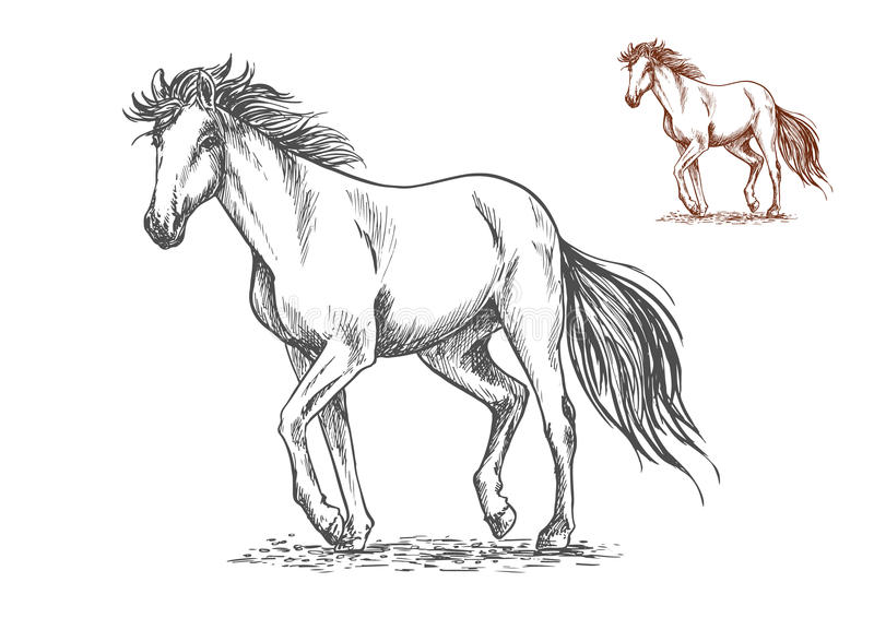 Running white horse sketch portrait. Running white horse pencil sketch portrait. Mustang with stamping hoofs gait and wavy tail on lawn vector illustration