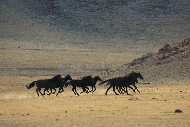 Running Wild Horses Stock Photo
