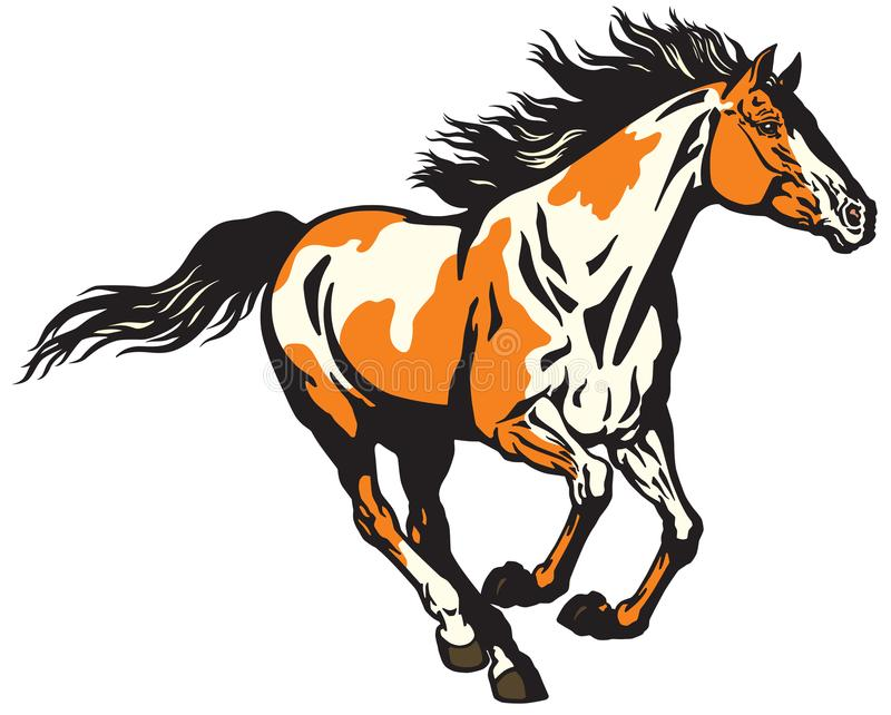 Running wild pinto colored horse royalty free illustration