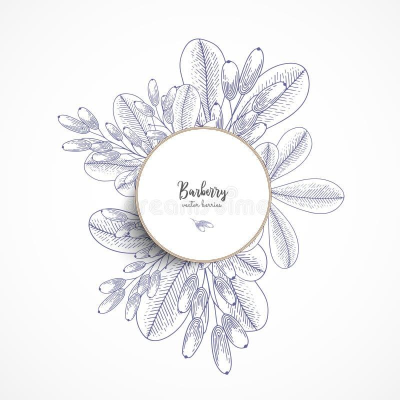 Runt baner för vektor med barberryen Tappningbaner med hand drog bär Naturlig modell klippt av vitbok Utmärkt för etikett, förpac stock illustrationer