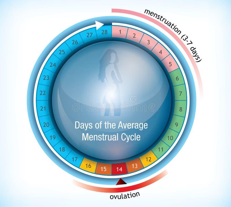 Runt flödesdiagram som visar dagar av menstruationen stock illustrationer