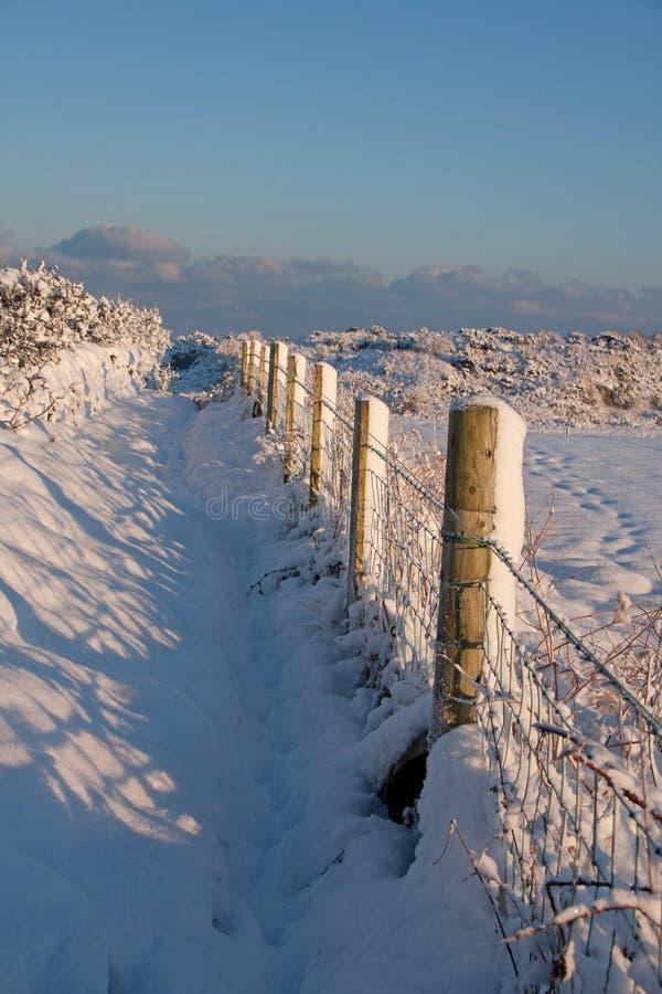 runt om snöig trearddur för fjärdplatser arkivfoto