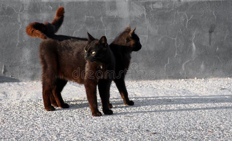 runt om svart se för katter royaltyfria foton