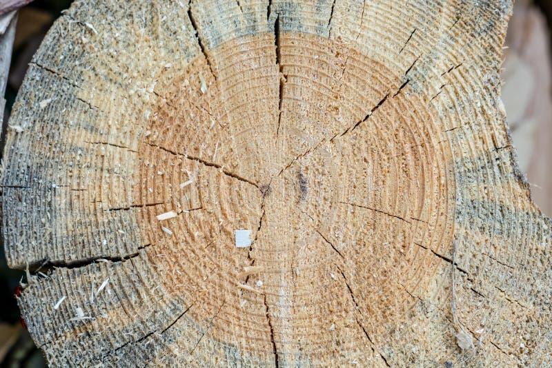 runt trä för journaler spricka på de klippta journalerna Närbild arkivfoto