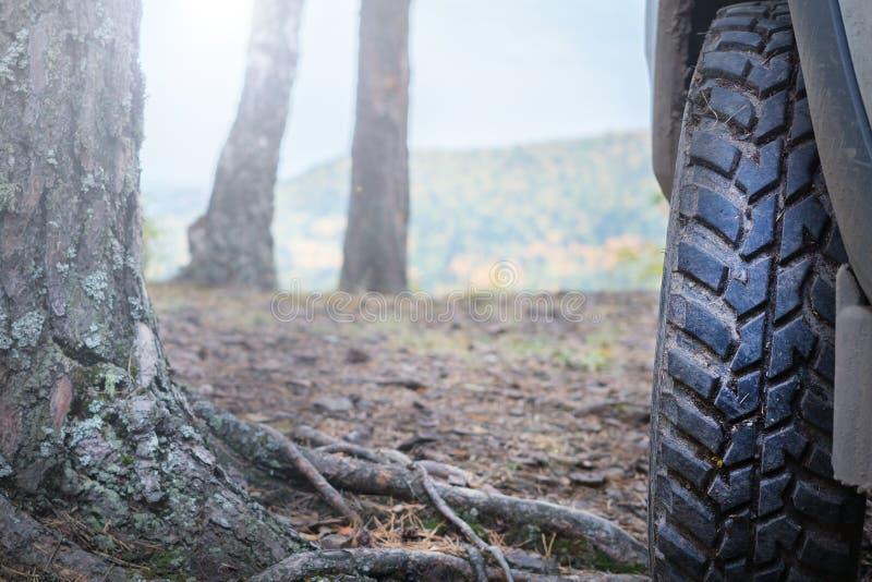 Ruota di automobile del camion sulla traccia fuori strada di avventura della foresta fotografia stock libera da diritti