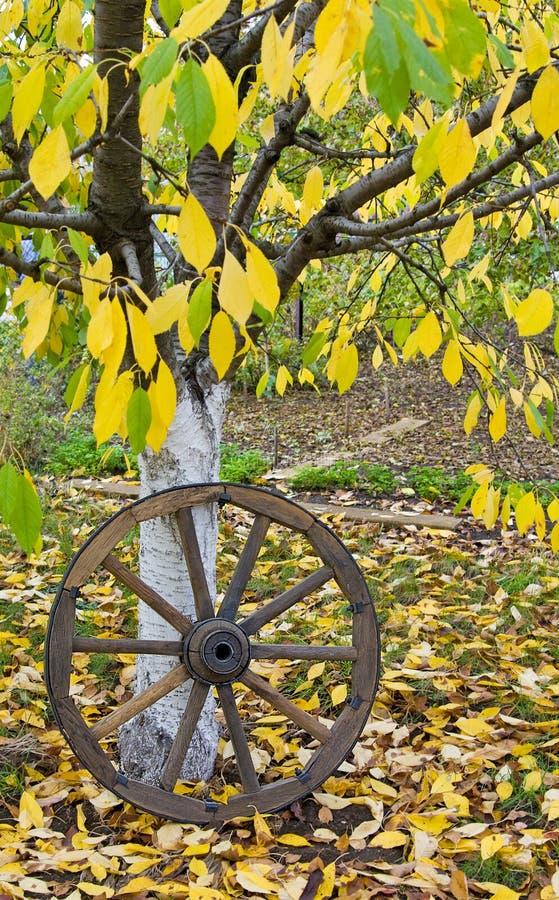 Ruota di legno del carretto sulle foglie di giallo di autunno immagine stock libera da diritti