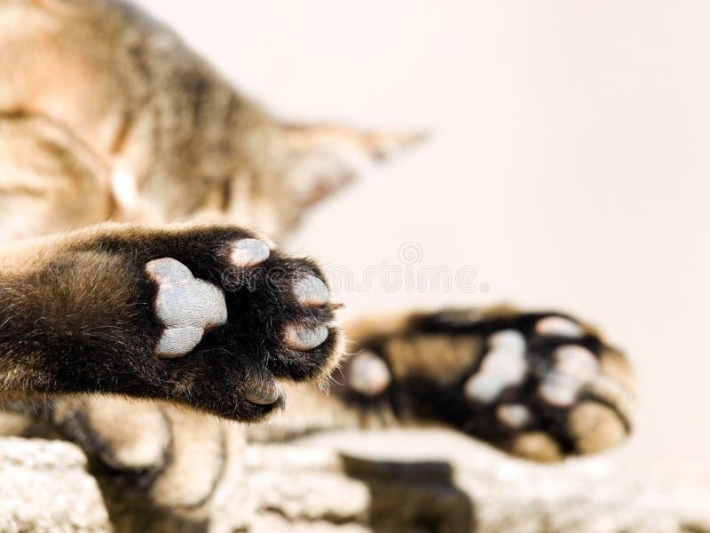 Ruptura do gato fotos de stock royalty free