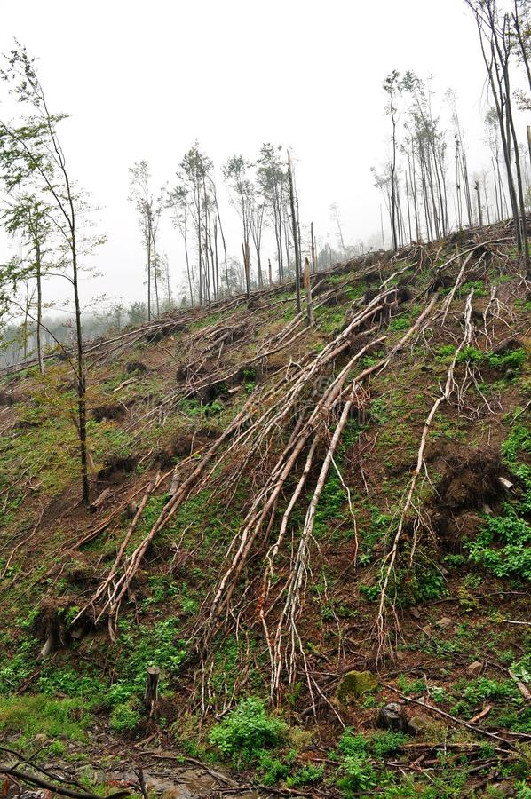Ruptura do gelo na floresta da faia da floresta foto de stock