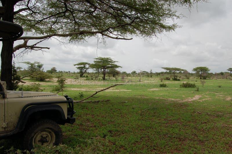 Ruptura do safari fotos de stock