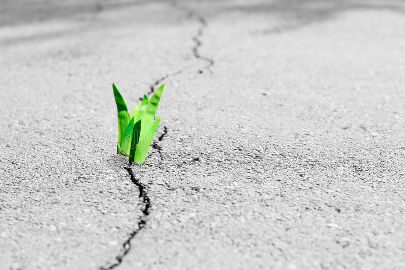 Rupturas pequenas da árvore através do pavimento O broto verde de uma planta faz a maneira através de um asfalto da quebra imagens de stock