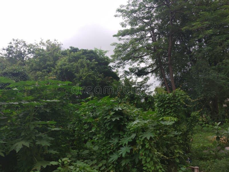 Rupture de matin de forêt images libres de droits