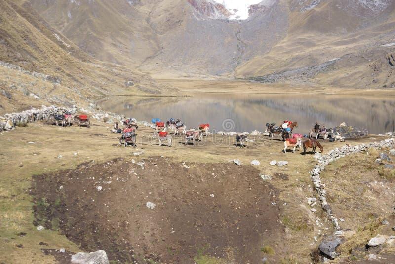 Rupture vers le haut du camp élevé et emballage des mules image stock