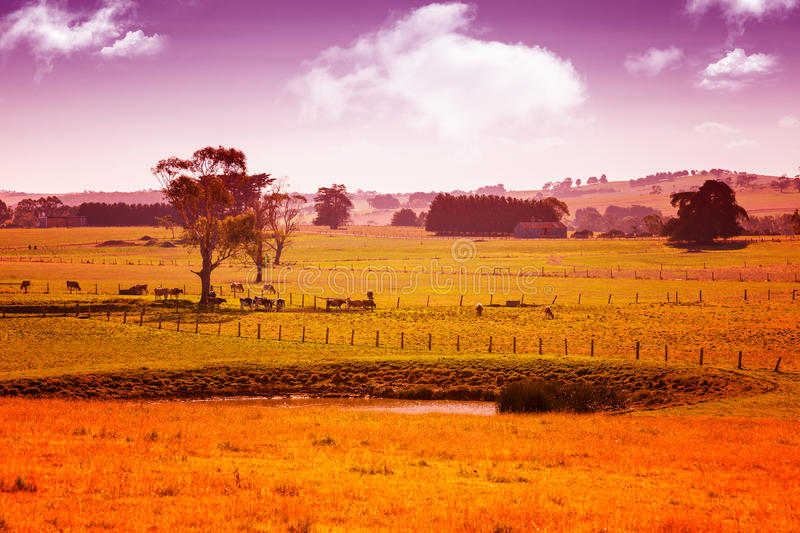 Australia countryside royalty free stock photography