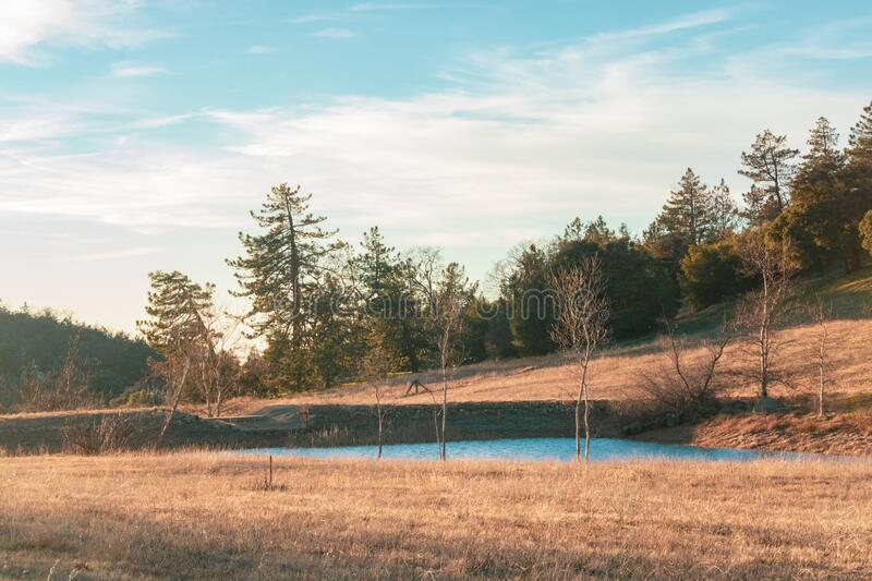 Rural autumn California winter scene blue duck pond, small lake with pine and oak forest behind and dry grass in foreground. Rural scene blue duck pond, small stock images