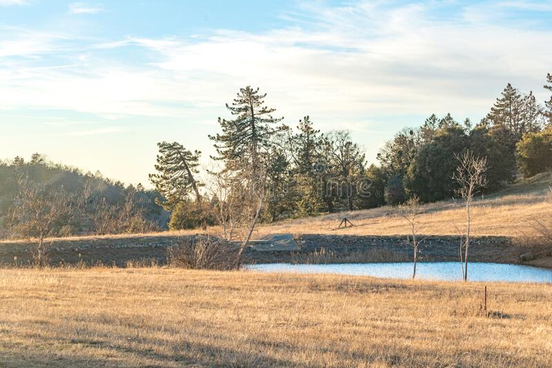 Rural autumn California winter scene blue duck pond, small lake with pine and oak forest behind and dry grass in foreground. Rural scene blue duck pond, small royalty free stock photography