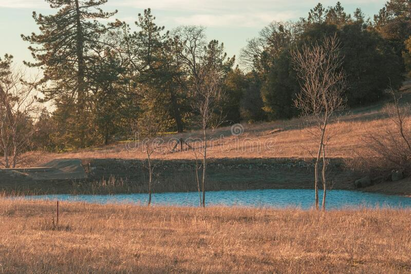 Rural autumn California winter scene blue duck pond, small lake with pine and oak forest behind and dry grass in foreground. Rural scene blue duck pond, small stock image
